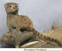 Precarious Predators
